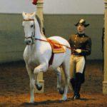 Španělsklá jízdárna - Bontour
