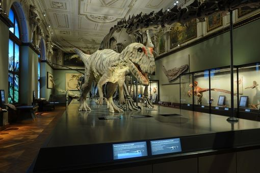 Přírodovědné muzeum Vídeň - Bontour