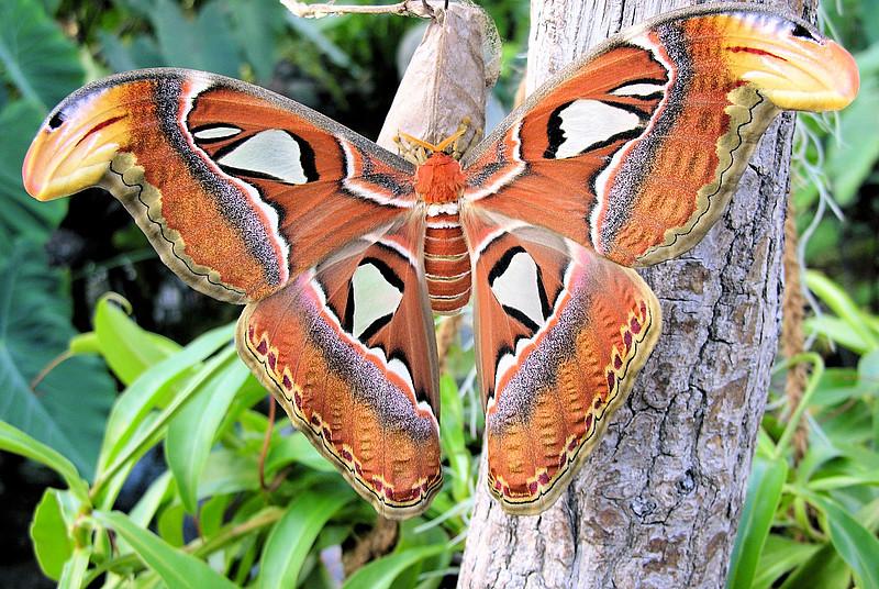 Dům motýlů - Bontour