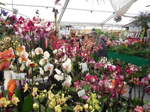 Mezinárodní výstava orchidejí - Bontour